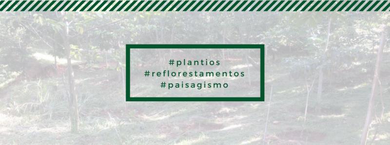 Plantios, Reflorestamentos e Paisagismo: saiba como funciona